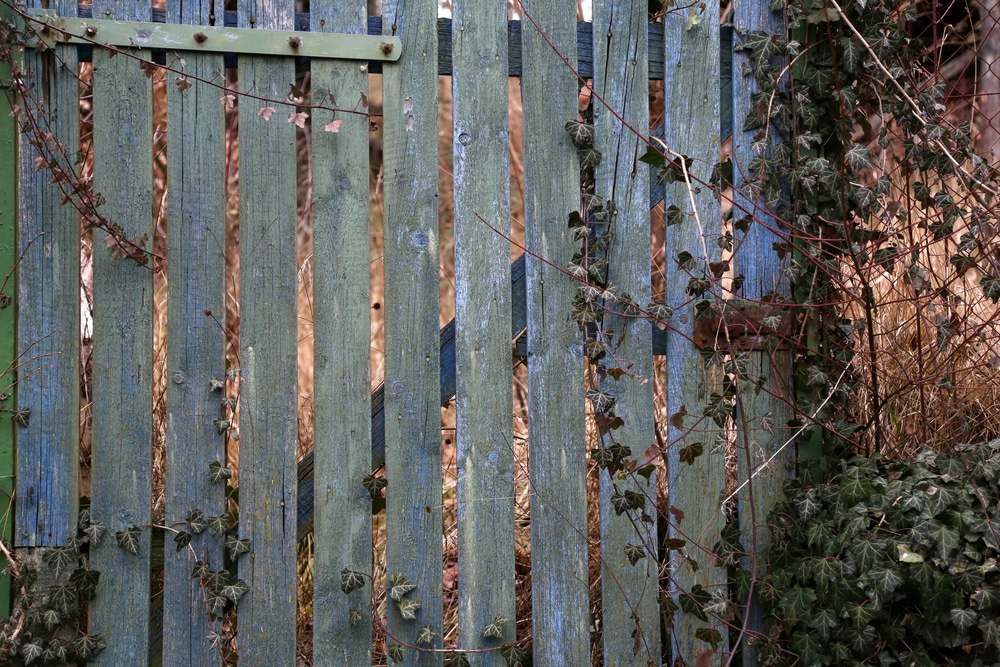 old wooden fence rotting