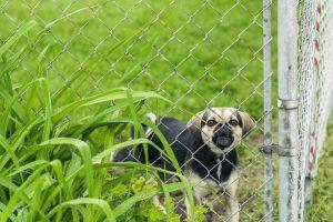 Dog Inside Chain Link fences - Big Easy Fences