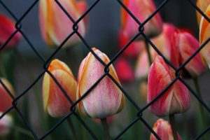 3 Ways for a Successful Chain Link Fence Upgrade